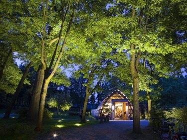 Up lighting on trees