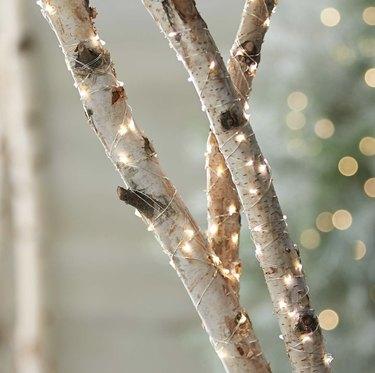 Light wrapped around tree
