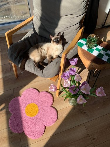 cat sitting on chair with tufted handmade flower rug nearby