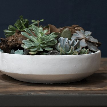 a succulent in a bowl on a wooden table