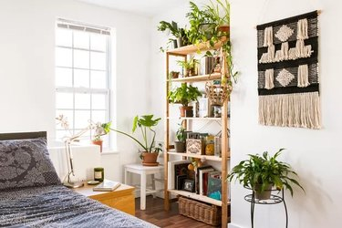 Plant-filled room