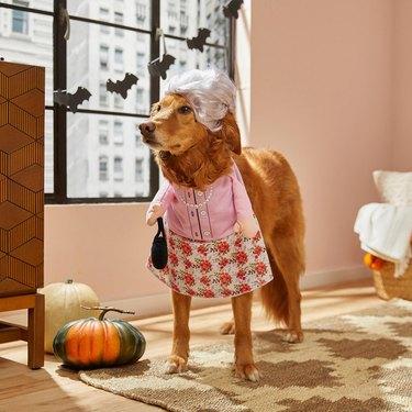 best pet halloween costumes