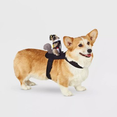 Hyde & EEK! Boutique Squirrel Pirate Rider Dog and Cat Costume