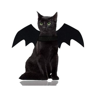 Malier Bat Wings Halloween Cat and Dog Costume