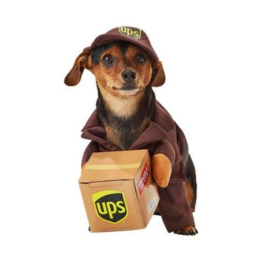 California Costumes UPS Delivery Driver Dog and Cat Costume