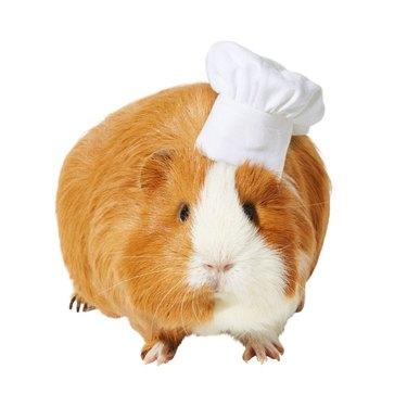 Frisco Chef Guinea Pig Costume Hat