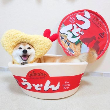 Happy Paws Essentials Instant Cup Noodles Dog and Cat Bed