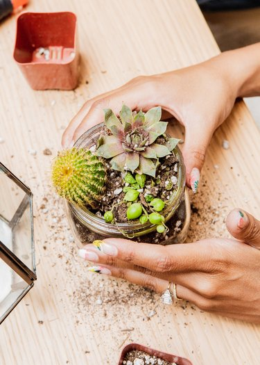 a woman holds a small glass jar full of succulents