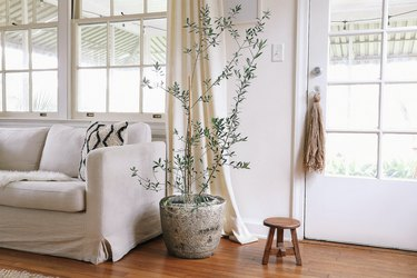 Tree plant in a hypertufa planter, between a white sofa and a wood stool