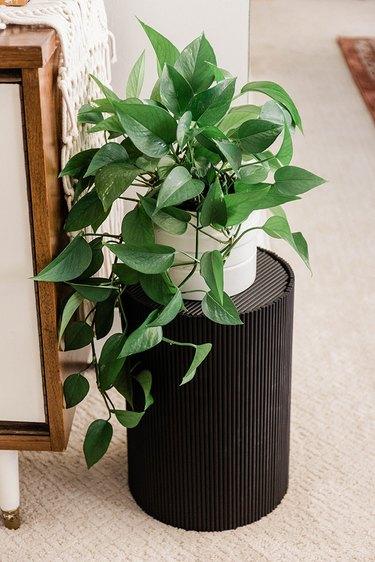 Pothos plant on black side table