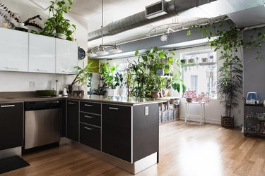 Brown kitchen unit with white overhead cabinets and brown island, with several large potted plants around the room with wood floor