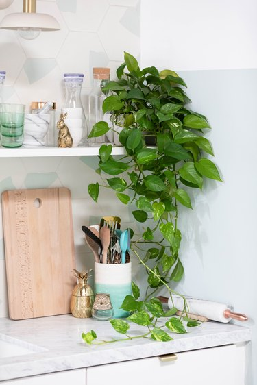 White shelf with Pothos plant, containers, gold bunny figurine. Counter kitchen wares, and a blue-white hexagon backsplash.