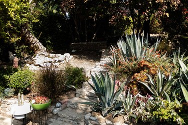 outdoor plants with stone steps
