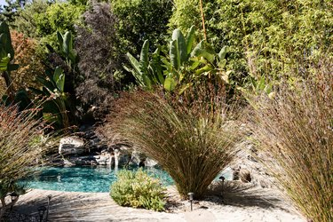 Patio with ornamental grass.