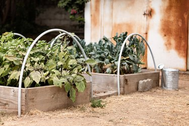 Outdoor gardens with a metal watering can