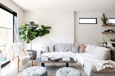 A white-walled living room with gray-white furniture, a tree plant and large window