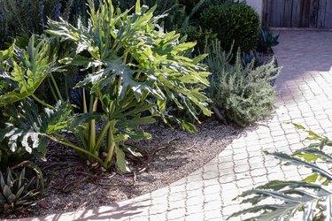 Tile walkway with plants