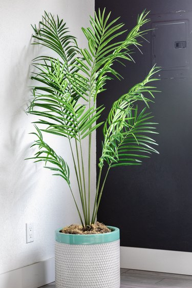 A palm plant in a gray-turquoise planter on a gray hardwood floors