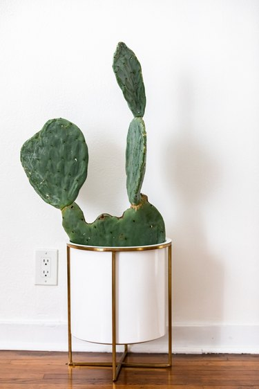 A cactus plant in a white planter on a wood floor