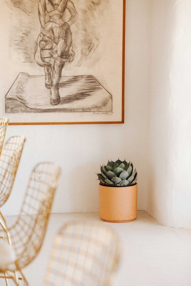 a potted succulent provides color in a clean white room