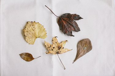 yellow, brown, and red dried leaves