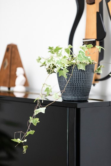 potted ivy plant sitting on upright piano