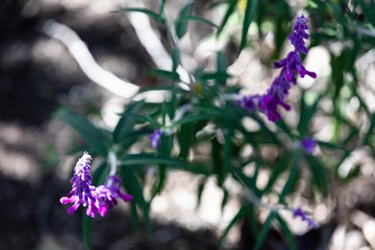 How to Revive Dead Outdoor Plants You Got Last Summer