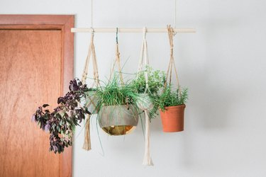Hanging herb plants with rope and and wood dowel by door