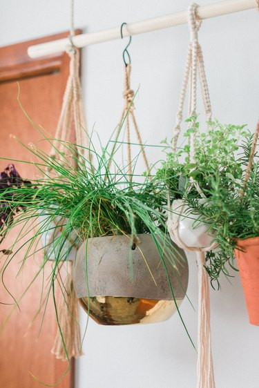 Hanging herb plants with rope and s-hooks by wood door