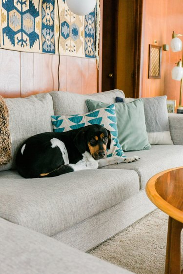 Gray sofa with dog and pillows and wood mid-century walls