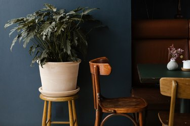 Potted plant beside blue wall and wood chairs