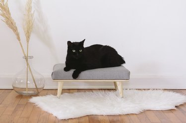 Black cat on daybed with white rug, wood floor, and vase with plant