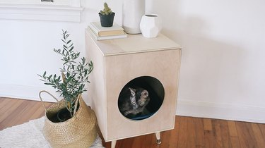 a cat pokes its head out of a plywood box on angled mid-century legs that hides a litter box and doubles as an end table