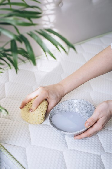 Hands holding sponge and small bowl over white mattress next to medium plant in white room
