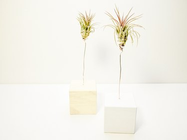 air plants cupped in wire plant holders sticking out of wooden blocks