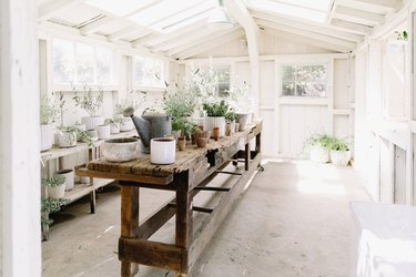 Interior of a white wooden shed, with a long wooden potting table in the center surrounded by potted plants