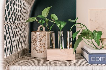 Growing plants in a DIY wood and glass propagation holder