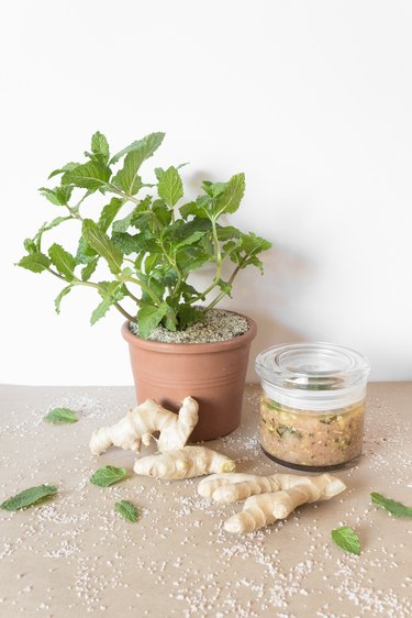 a potted mint plant, ginger roots, and a jar of body scrub