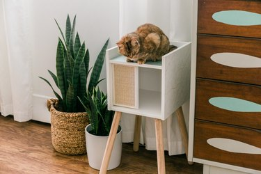 Orange cat sitting on DIY IKEA cat house in modern room with wood flooring and potted plants, drawers, and white curtain