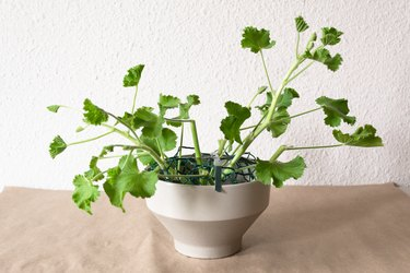 geranium stems in a white vase