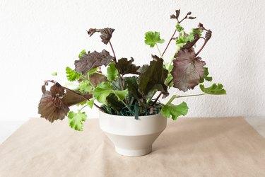 geranium and nine bark stems in a white vase
