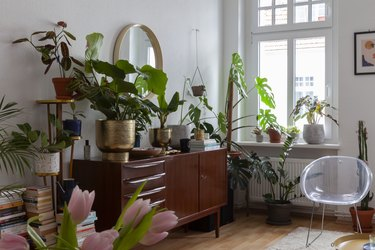lots of houseplants and midcentury credenza in eclectic boho living room