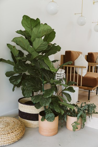 Plants in woven baskets, and globe sconces. Wood chair with brown upholstery and a white pillow.