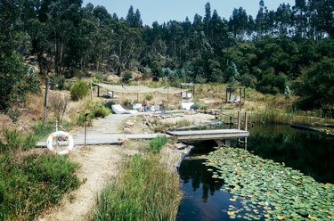 a small swimming hole with a dock, a sunbathing area, and water lilies