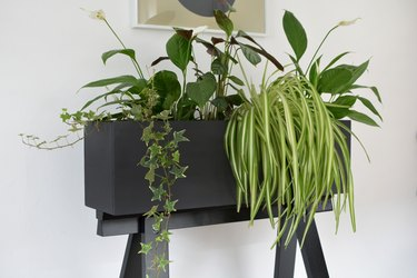 robust plants growing out of a black wooden diy planter made from an ikea desk kit