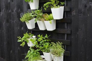 Outdoor vertical garden DIY