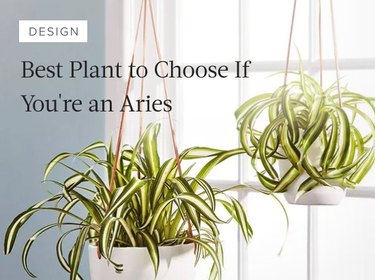 Best Plant to Choose If You're an Aries