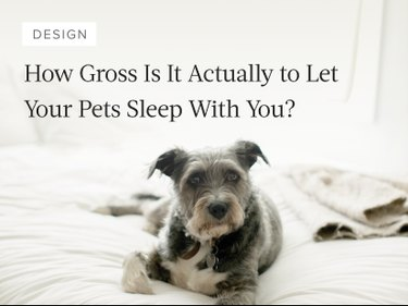 Should you let your pets sleep with you