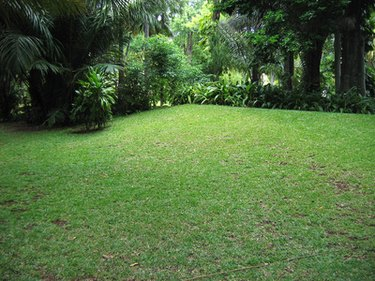 replant grass seed