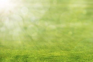 Green Grass with Sun Light
